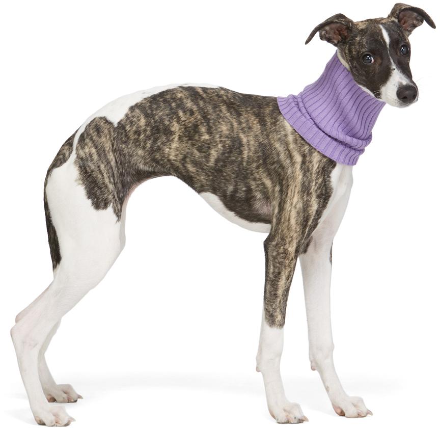 Purple Nonna Animal Collar